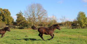 chevaux-liberte