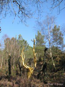 L'arbre d'or dans le Val sans retour à Tréhorenteuc