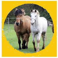 balade-grand-poney