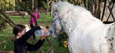 Tu as soif mon cheval ?